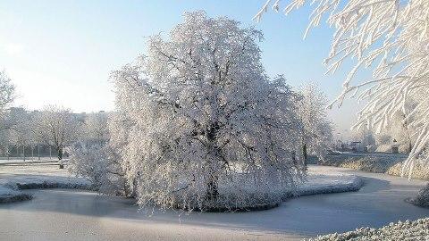 10507_454664304585682_1880659255_n winter scene